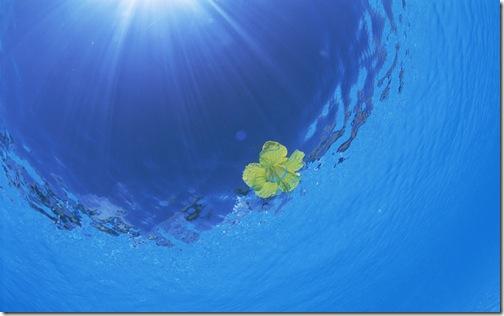 обои море (8)